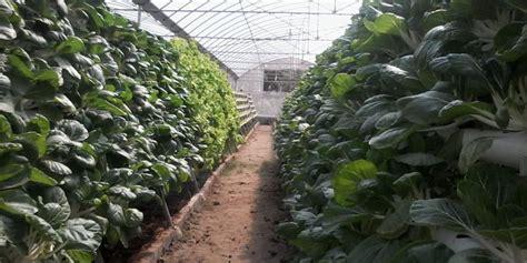 membuat rumah green house rp 450 juta dari jokowi untuk rumah hidroponik di rusun