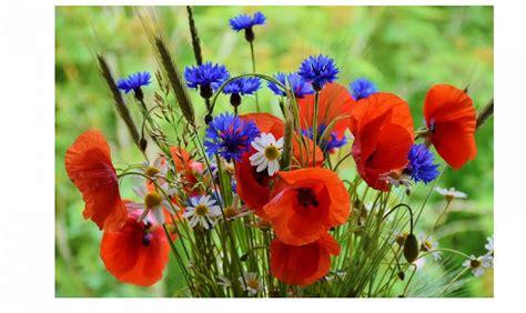 il significato dei fiori il significato dei fiori casafacile