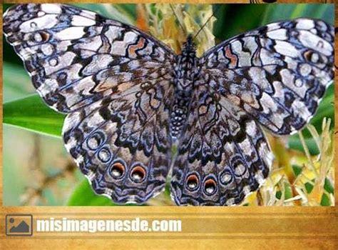 imágenes góticas en movimiento imagenes de mariposas im 225 genes