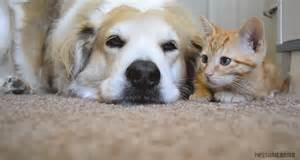 puppy gifs cat n gif by missunicornio on deviantart
