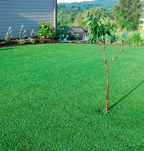 backyard grass alternatives best 25 lawn alternative ideas on grass