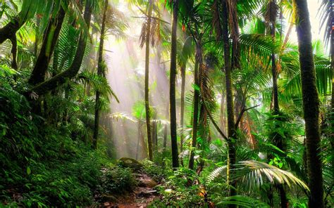 Tropical Jungle tropical rainforest plants to see on your next