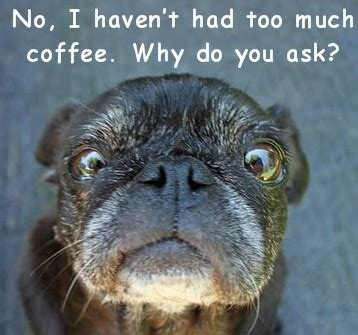 Too Much Coffee Meme - tolsi too much coffee fluffybutts funny dog meme