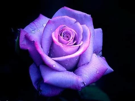 Best 25 All Things Purple 25 Best Images About Flowers On Wallpapers Purple Things And Flower Wallpaper