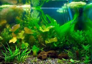 passions et partage aquariophilie choisir