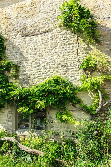 ivy and stone home on instagram old stone house with green trees ivy england stock photo
