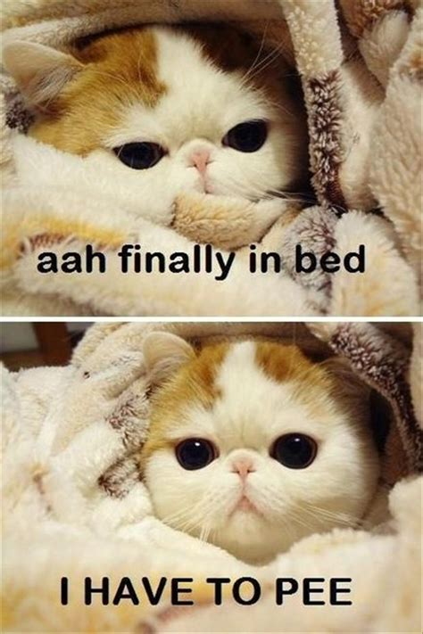 cat peeing in bed attack of the funny animals 42 pics
