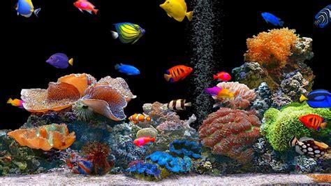descargar fondos de escritorio con movimiento y efectos peces de colores hd 1600x900 imagenes wallpapers