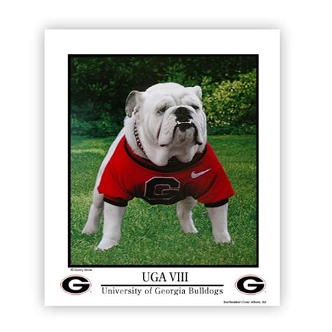 uga dawg house uga viii poster 20x24 quot dawg house pinterest