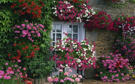 beautiful flower gardens beautiful flower french