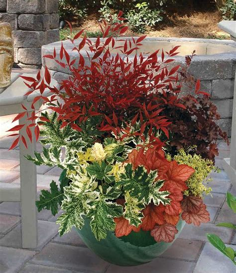 fall plants best 25 fall planters ideas on pinterest fall flower