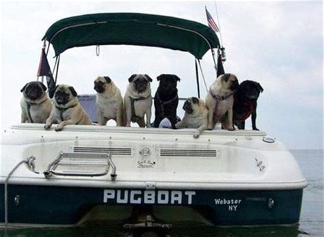 funny names for boats creatively funny boat names 22 pics