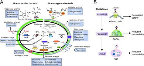nonribosomal antibacterial peptides  target multidrug