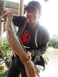 asyiknya mancing ikan lele catfish pemancing punya cerita