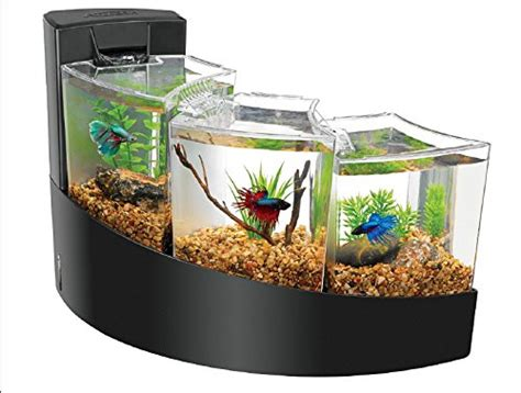 aquarium design betta unique and cool betta fish tanks my dog ate my money