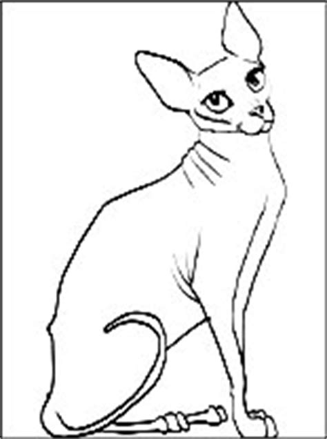 hairless cat coloring page sphynx cat coloring page coloring pages