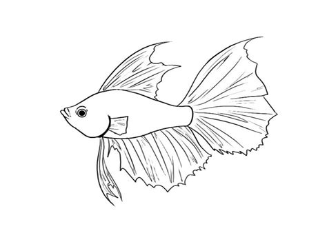 Betta Fish Coloring Pages how to draw a betta fish book covers