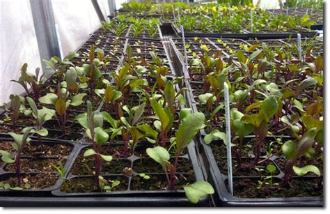 searching for tough seed to combat the harsh agro climate merging dna technology with farmers indigenous knowledge s agriculture narratives books how to germinate your seeds the permaculture research