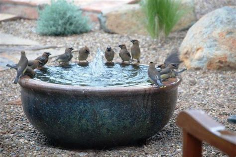 bird bath birds bees and bugs pinterest
