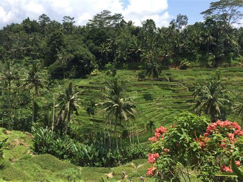 tegallalang tegallalang indonesia rice fields