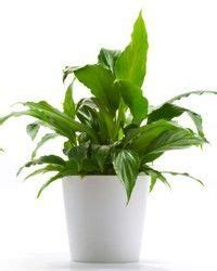 indoor plants no sun top 10 hard to kill house plants low lights and plants