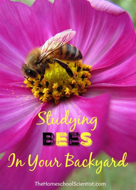 studying backyard bees the homeschool scientist