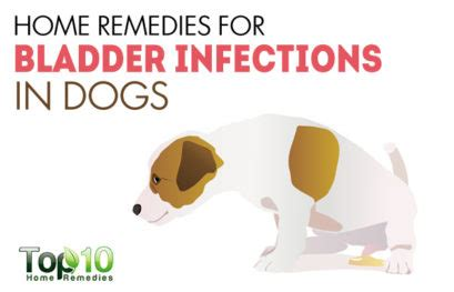 pets archives top 10 home remedies