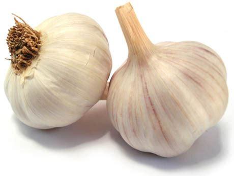 testa di aglio aglio e le sue 1000 virt 249 eticamente net eticamente net