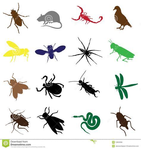 las cadenas alimenticias wikipedia sedici insetti e roditori illustrazione vettoriale