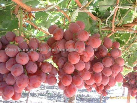 Nangka Merah By Golden Effort globe fresh grape grape table grape products china