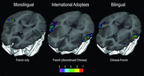 language pattern brain finding lost languages in the brain neuroscience news