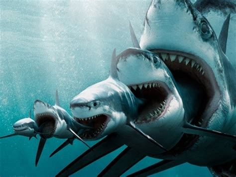 baby shark eating most influential in biodiversity twtrland