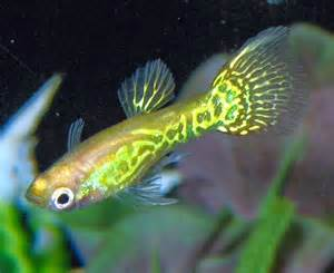Freshwater  Blok888: Top 10 Most Beautiful Freshwater Fish in