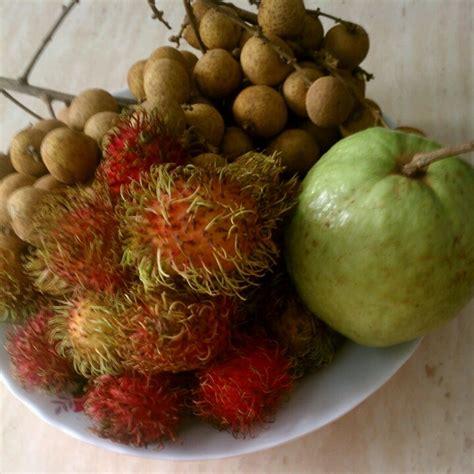 fruit x asia asian fruits names 2017 2018 best cars reviews