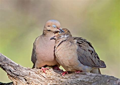 what valentine s day birds can tell you about your love
