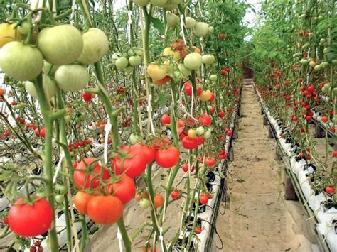 sle business plan vegetable farm high tech agriculture the extraordinary profits of