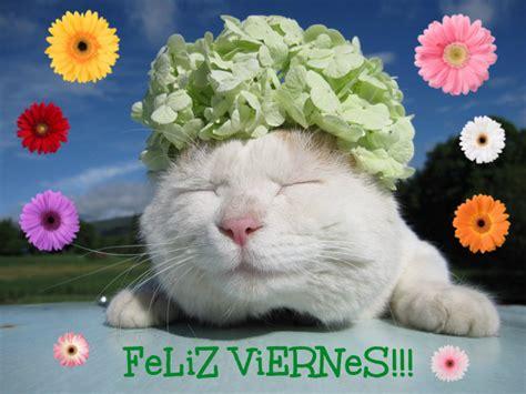imagenes viernes gatos 161 im 225 genes gatunas de feliz viernes