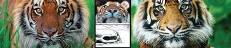 Kia Tiger Nose 2016 Kia Optima Review Series 1 Of 3 Kia