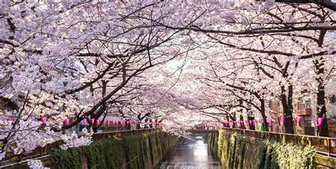 St Green Blossom 10 best places to catch cherry blossoms in japan hotelscombined