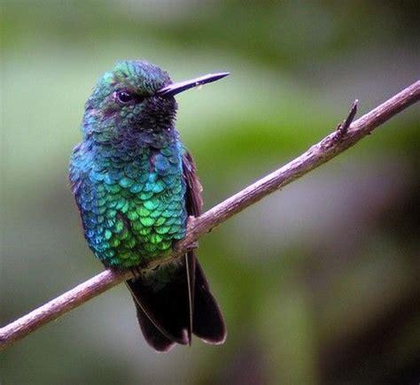 blues greens colour pinterest blue green bird and