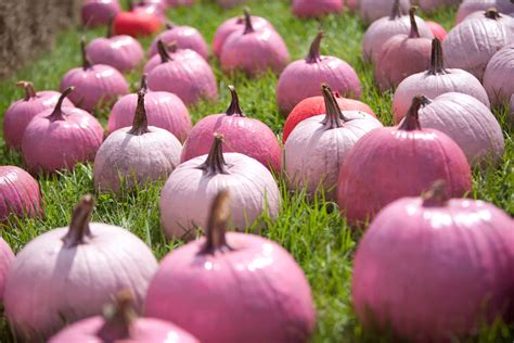 tickled pink the pink pumpkin offer more than mere
