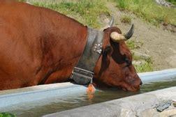 alimentazione animale alimentazione animale r 233 gion autonome vall 233 e d aoste