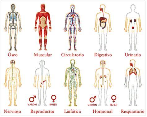 imagenes en 3d del cuerpo humano recursos tic pedagog 237 a sin papel sitio de noticias de