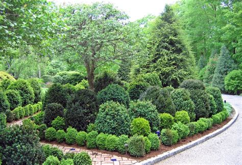 backyard trees and shrubs traditional landscape