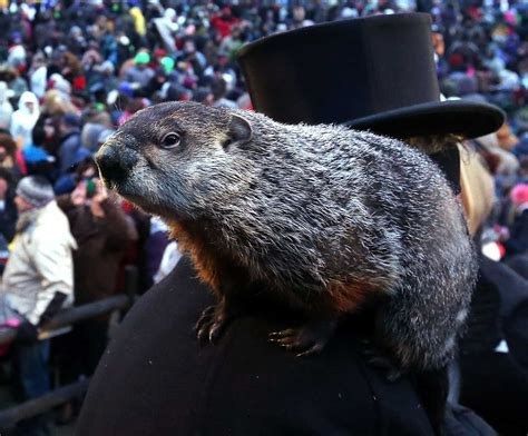 groundhog day 2016 groundhog day 2016 punxsutawney phil sees no shadow
