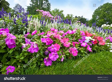 Garden Flowers A Z Pretty Manicured Flower Garden With Colorful Azaleas Stock Photo 72286615