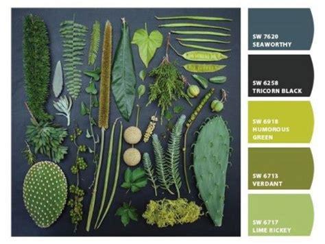 1000 images about plant palette on pinterest seasons
