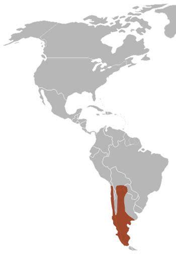 america map grey south american grey fox the animal files