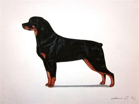 rottweiler akc standard rottweiler archival print akc by emmasbestinshow