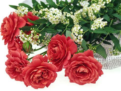 wallpaper rose bergerak kumpulan gambar bunga romantis i love you animasi